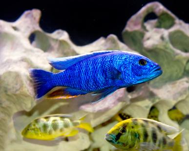 Malawi mineralien vitamine 1liter s wasser fische for Aquarium fische im gartenteich